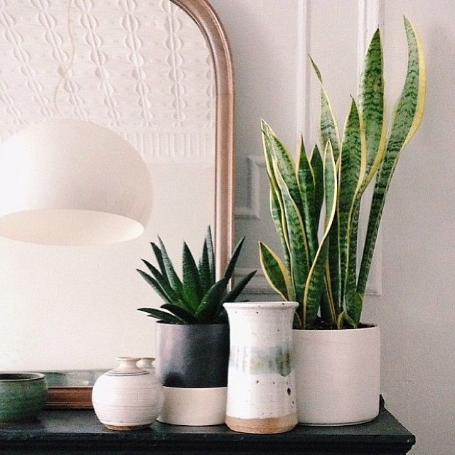8e6963c13fcd9c10e9116758f01e9b1e--snake-plant-plants-in-bedroom.jpg